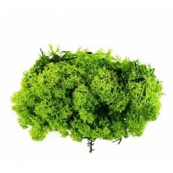 Busta lichene verde scuro 04