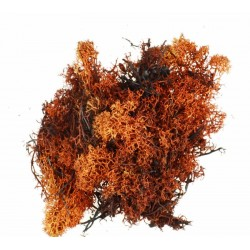 Busta lichene marrone-rosso 06