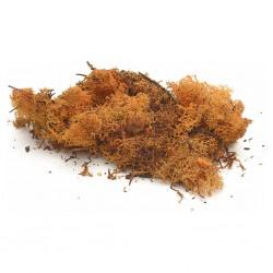 Busta lichene arancione 017