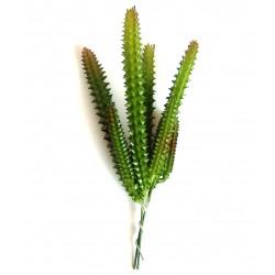 Cactus grande 013