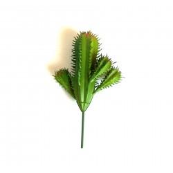 Cactus piccolo 014