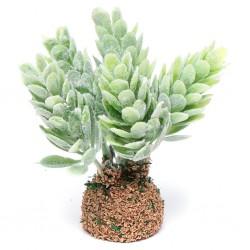 Cactus-pianta grassa 018