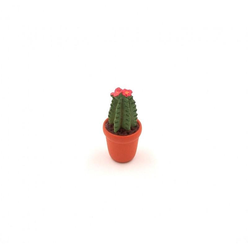Vaso con cactus-pianta grassa 025